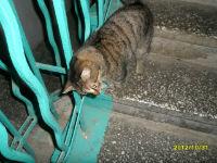 кот обтирается об ноги помощью этой