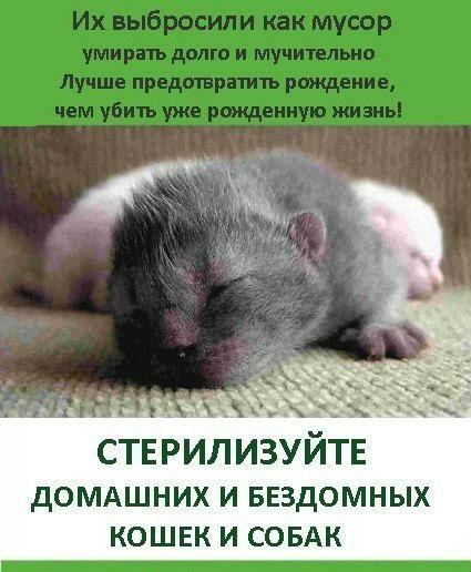 Приглашаем всех на стерилизацию 25 декабря! - Первоуральское Городское Общество Защиты Животных