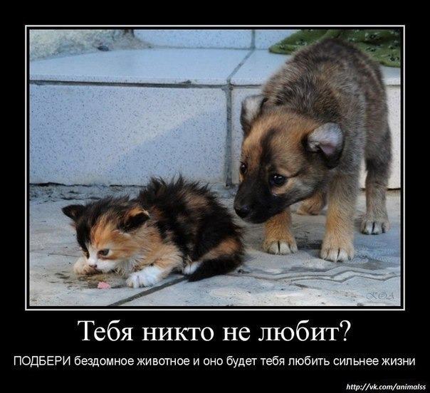 общество защиты бездомных животных
